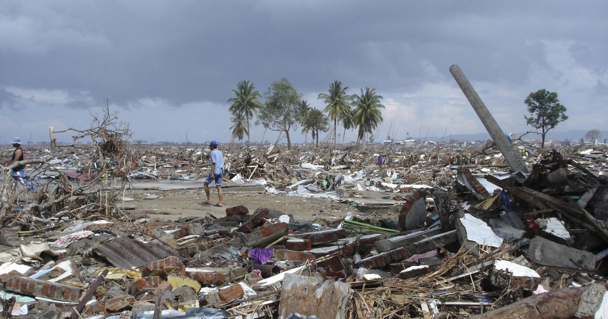 Marking 15 Years Since The Indian Ocean Tsunami 2004 World Animal Protection