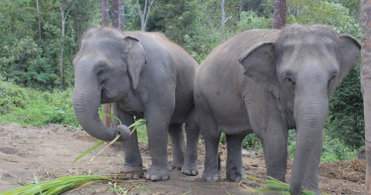 Elephant friendly tourist guide   World Animal Protection