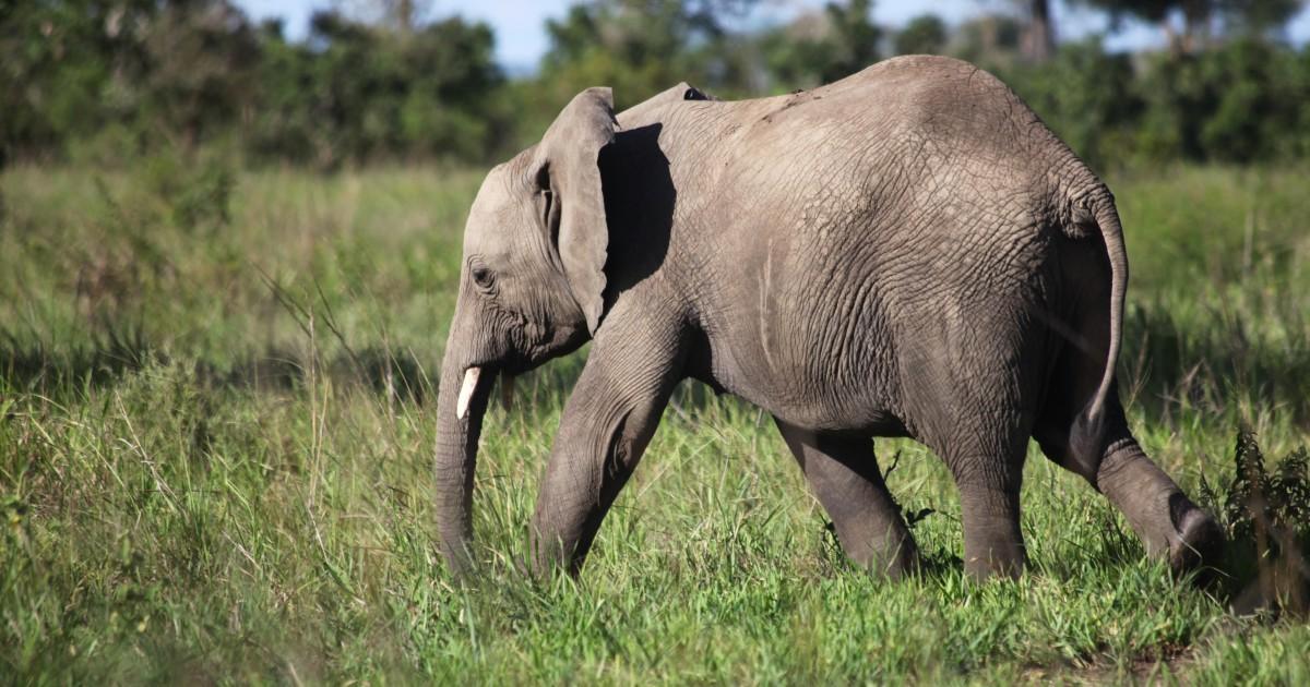 You cannot hide an elephant - Mustapha B Mugisa. Mr. Strategy